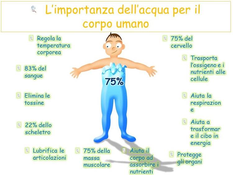 L 39 importanza dell 39 acqua per il corpo umano cristalfarma for Conosci il tuo corpo scegli il tuo cibo