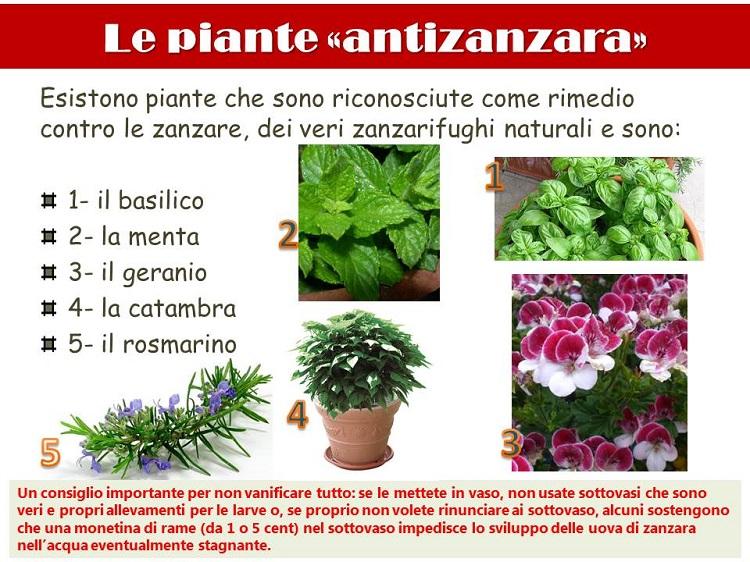 Le piante antizanzara cristalfarma for Piante da frutta nane prezzi