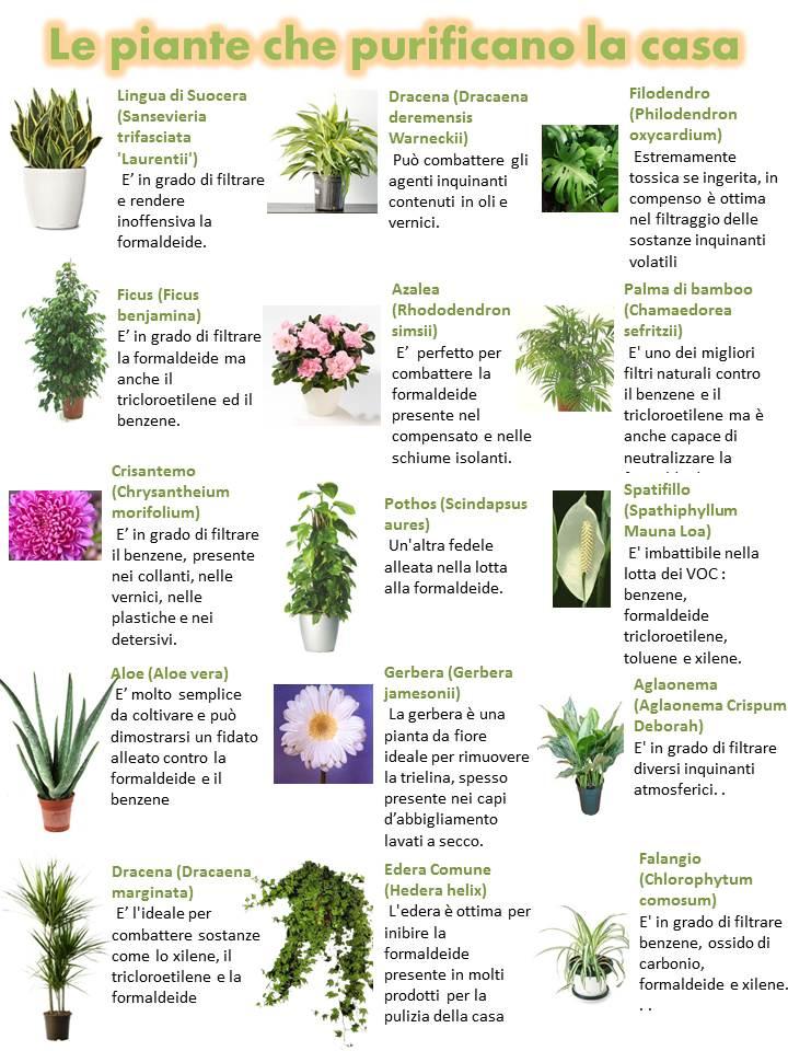 Le piante che purificano la casa cristalfarma - Umidita ideale in casa ...